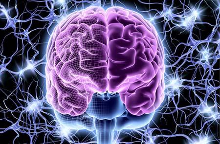 brain714