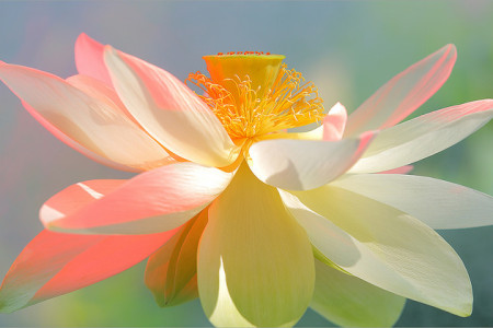 meditazione luiben
